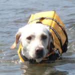 犬連れ本栖湖 泳ぎまくりだワン!
