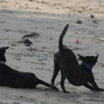 愛犬の殺処分を選択するの?ペットを捨てる人たち