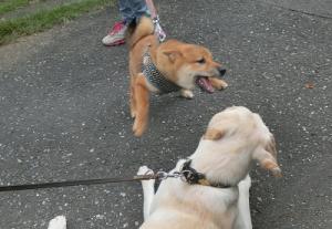 遊びに誘う子犬