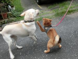 子犬にパンチされる犬