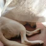 子犬を産む母犬との暮らし 喜びや楽しさをこれから・・・