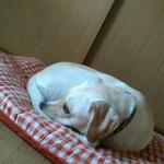 抜け毛がつきにくく洗える犬ベッド&ペットの毛が落ちやすくなる洗剤