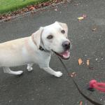 犬のリードは何がおすすめ?日常使いのリードの選び方