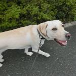 甘えん坊犬は幸せな犬!愛情を注いで育てるってどういうこと?