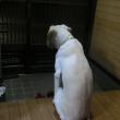 玄関に座る犬