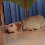 犬の睡眠時間 平均はどのくらいなの?