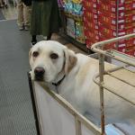 犬の黄色いリボン「イエロードッグプロジェクト」