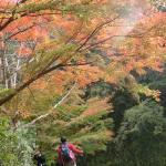犬連れ紅葉の養老渓谷 再び