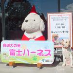 富士ハーネスに新しいPR犬が誕生しました
