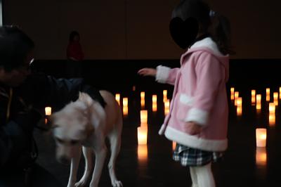 凍犬に触ろうとする女の子