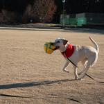 ゴープロで走りまわる犬を撮ってみました