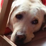 犬のフケがすごいんですけど!原因と対策を調べてみました