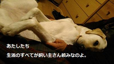 飼主に甘える犬