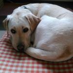 犬の抜け毛が多い「換毛期」の時期はいつからいつまで?