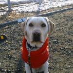 うっすら雪が積もった日に雪に慣れていない犬とお散歩に行ったよ