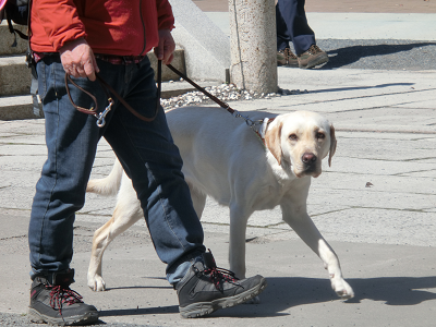 聖天山境内を散歩する犬