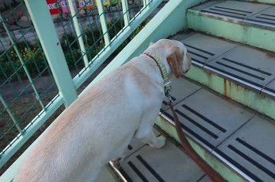 歩道橋を昇る犬