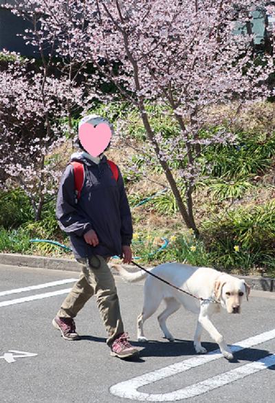 熊谷桜と犬