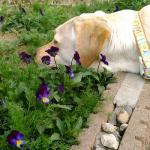 犬との信頼関係を築くには犬の意思を尊重してあげる