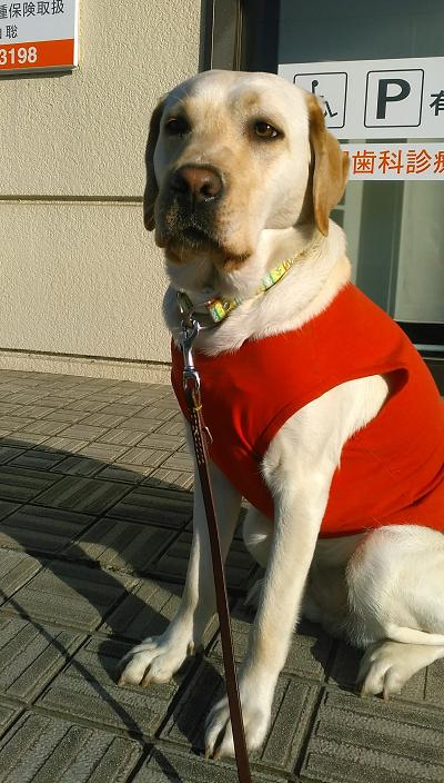 座る犬正面