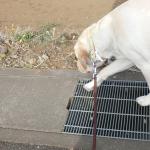 雨の日も犬のお散歩に行くべき?