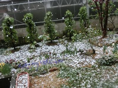 四月の庭の雪