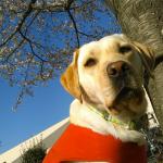 犬が病院を嫌がる怖がる理由と病院の選び方