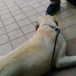 「待て」はできるけれど「待つ」ができない犬
