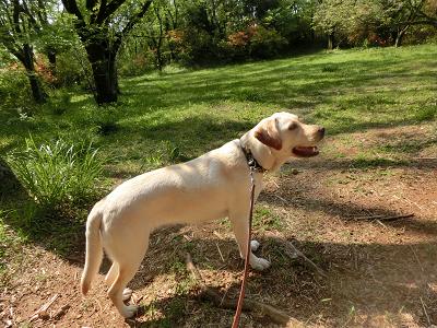 千畳敷に立つ犬