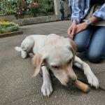撫でると人の手を甘噛みしちゃう犬にはおもちゃを噛んでもらう