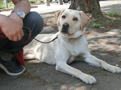 木陰で涼む犬
