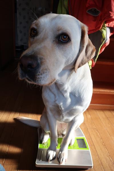 犬の体重測定