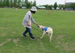 人と一緒に遊ぶ犬