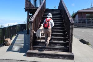 階段を昇る犬