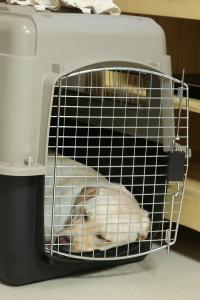 クレートで眠る犬