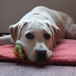 本格的な夏が来る前に!犬の熱中症の予防と対策を学んでおこう