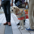 盲導犬PR犬