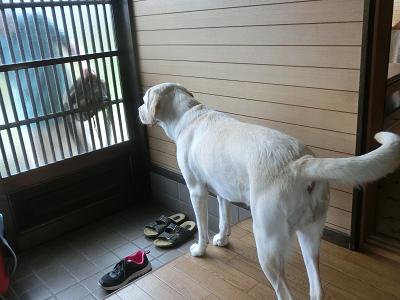 飼い主の帰宅を出迎える犬