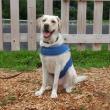 柵の前に座る犬