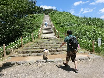 階段を駆け上ろうとする犬
