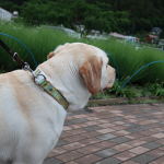 犬の散歩の速度はどのくらい?まったり歩きで運動不足にならない?