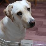 雨の日の散歩で犬にレインコートは必要なの?