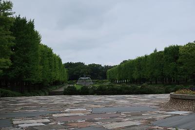 昭和記念公園銀杏並木