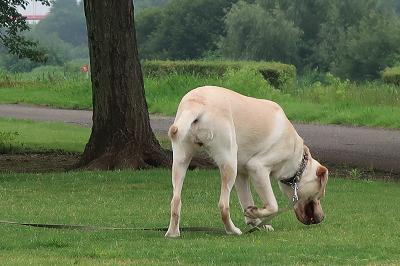 探検する犬