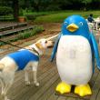 ペンギンの置物に興味を示す犬