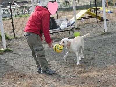 ボールを持って来る犬