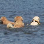 本栖湖は犬連れにおすすめの水遊びスポット