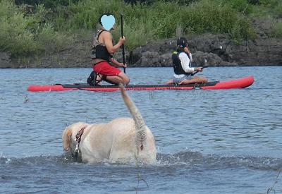水辺で遊ぶ犬