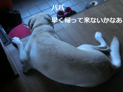 家族の帰りを待つ犬