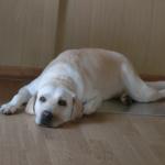 飼い主が出かけるときに見送りをしない犬は薄情なの?